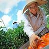 Farmer Erin Bullock