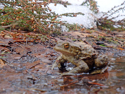 Jasmijn almost stepped on this very lucky toad. We couldn't believe they were active in the snowy conditions.