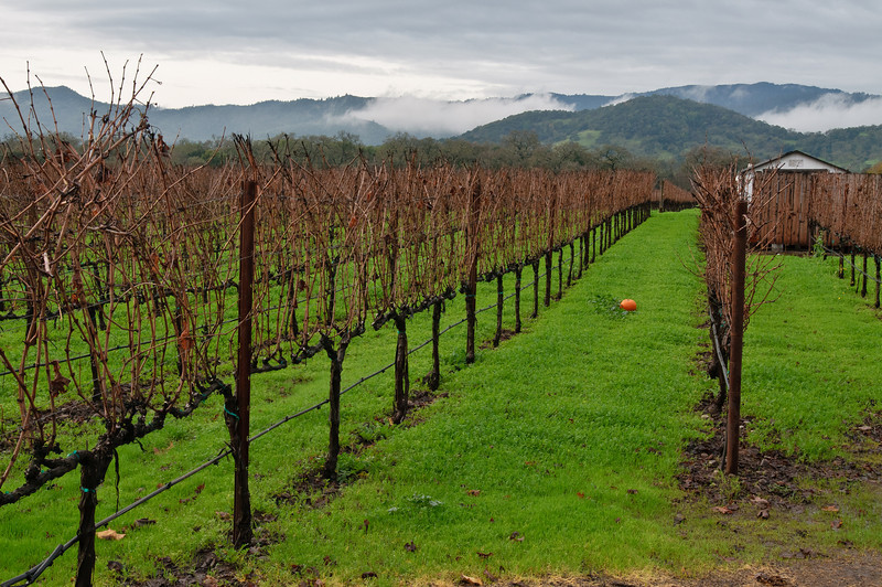 The morning fog over the Napa Hills (over yonder is Sonoma, then the Pacific Ocean) brought some neat scenery to Goosecross's vineyard!