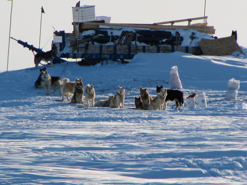 A dogsledge team visited us during 2010<br /> <br /> Photo: Thomas Blunier