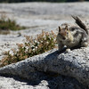 Ground squirrel expecting a snack