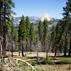 Half Dome through a partially burned-out pine forest