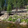 East bank of Illilouette Creek