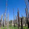 Remains of a forest, from a fire 8 years before