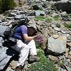 Chris capturing Alpine flora