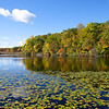 Water lilies on Cranberry Lake