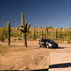 Saguaro cacti - yes they do get crazy big