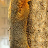 Hanging out: A fox squirrel hangs off a hackberry tree at the Dobb's Park Nature Center. Smeared on the tree is a mixture of peanut butter and seeds, a little variety for wildlife now dependent on humans for help.
