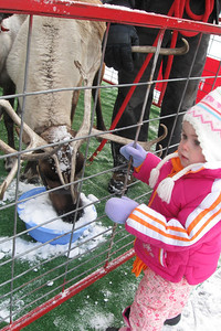 Reindeer Days at Linden Hills