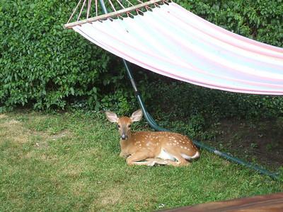 08 Deer at Defranco's