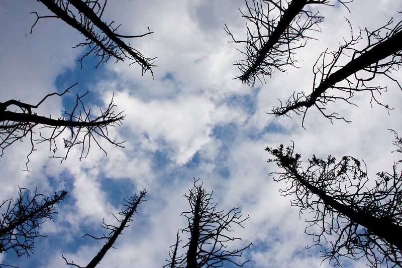 Burnt trees stand out against the sky.