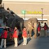 Elephants Leaving the Garden in Boston.