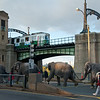 Elephants and Green Line over/under in Boston.