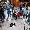 Attention: Shelter animals get lots of attention from shoppers at the Honey Creek Square Mall Saturday morning during the annual event.