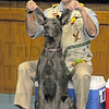 """No trunk: Amazon John of Silly Safaris tries to pass his Great Dane """"Elly Phant"""" off as a pachyderm during his presentation Wednesday afternoon at Ouabache Elemntary School."""
