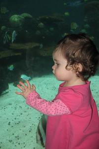 fish tank!