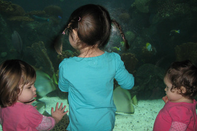 Kate, Solidad and I watch all the fishies :)