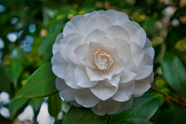 I found this amazingly shaped flower while walking through the Filoli gardens and couldnt help snapping away!