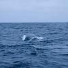 Ein Walfisch...der Typ aus Hawaii glaubte das es sich hier tatsaechlich um einen Blauwal handelt....