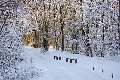 Gartmorn in the snow 02/12/2010
