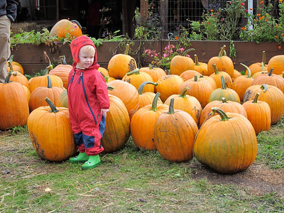 So many pumpkins...