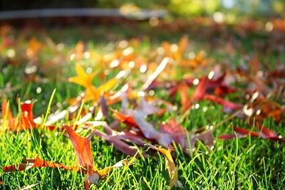 Sunday at the Morris Arboretum