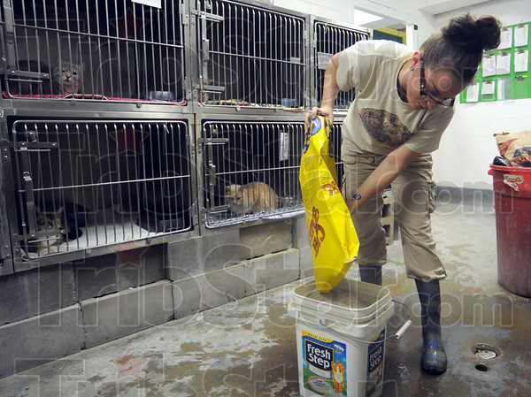 Kitty litter: Terre Haute Humane Shelter employee Megan Burton pours kitty litter into a bucket as she prepares the animals for viewing Thursday morning.