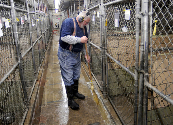 Morning duties: Steve Brown cleans the kennel area prior to Thursday's opening at the Terre Haute Humane Shelter.