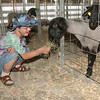 Tribune-Star file photo/Jim Avelis<br /> Fair day: Gabe Hills feeds sheep at the Vigo County Fair Thursday, July 16, 2009.