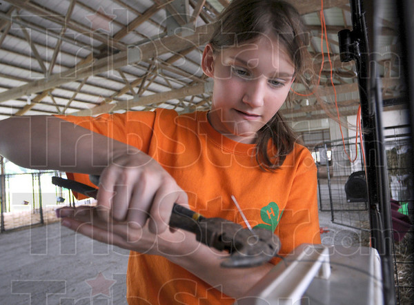 Tribune-Star file photo/Bob Poynter<br /> Wired for 4-H: Kate Edler attaches a fan to the fence where she will corral her goats during 4-H competition at the Vigo Co. Fair July 11, 2009 at the Wabash Valley Fairgrounds.
