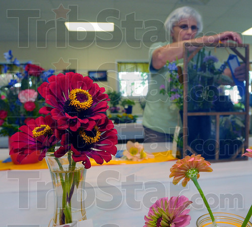 Helping out: Julie Agee of the Wabash Valley Herb Society helps hang award tags on the entries in the Horticulture building at the Vigo County Fair Sunday afternoon.