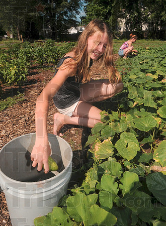 Tribune-Star/Joseph C. Garza<br /> Ripe for the picking: Niccole Bishir, 15, of the New Haven of Hope congregation, picks cucumbers out of the church's community garden near the intersection of 16th Street and Liberty Avenue for a fundraiser Saturday.