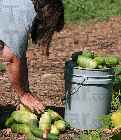 Tribune-Star/Joseph C. Garza<br /> Their bucket runneth over: Martha Edwards, a member of the New Haven of Hope congregation, piles more cucumbers next to ones that she has just picked at the church's community garden Saturday.