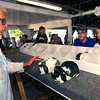 Moment of truth: Rabbit judge Tex Thomas looks over Cody Devanis' mini-lops Monday afternoon during at the Vigo County Fair. With Devanis is his sister Baylee Fidler, a mini 4-Her helping out her brother.