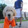 "Ready to howl: ""Sikorsky"" sports a C.H.A.N.C.E.S. t-shirt while waiting a chance to howl with his owner, Americorps volunteer Erik Albrecht who is working with C.H.A.N.C.E.S. for Youth."