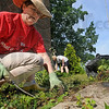 Bunch of help: Anne Bunch (L), Andrea Freeman and Howard Billings work weeding and soing lawn care at the Senior Citizen Center Friday morning as part of the United Way's Day of Action.