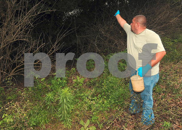 "Tribune-Star/Joseph C. Garza<br /> Getting those ""hard to reach"" places: Warren Sweitzer of the Vigo County Health Department's Vector Control Division tosses larvicide pellets into standing water just east of Thompson Ditch Tuesday."