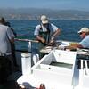 Der Kapitain und sein 1st Mate machen die Fische sauber und filletieren sie gleich - im Hintergrund ist Malibu