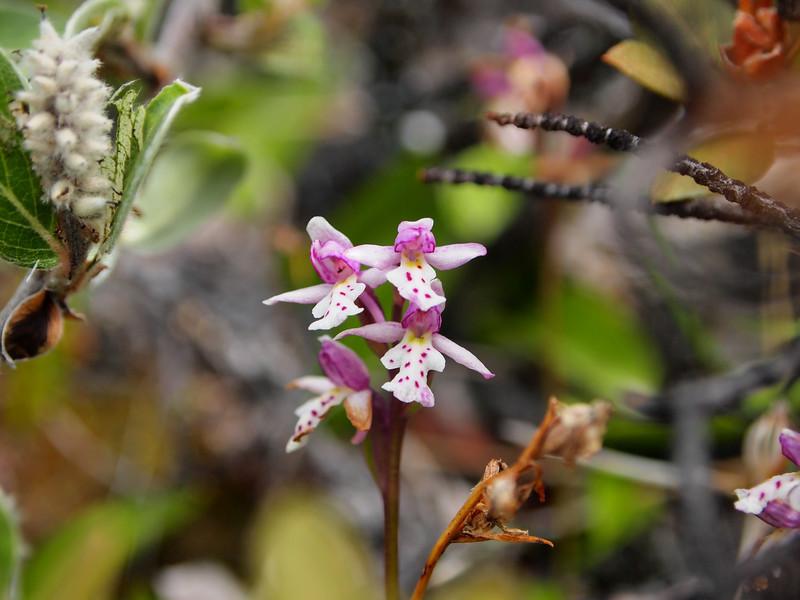 Flower in blume<br /> <br /> Photo: Kenji Kawamura