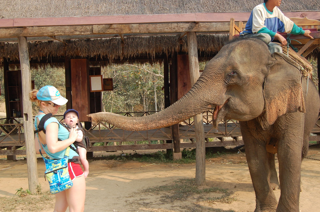 Anakin being eaten by elephant