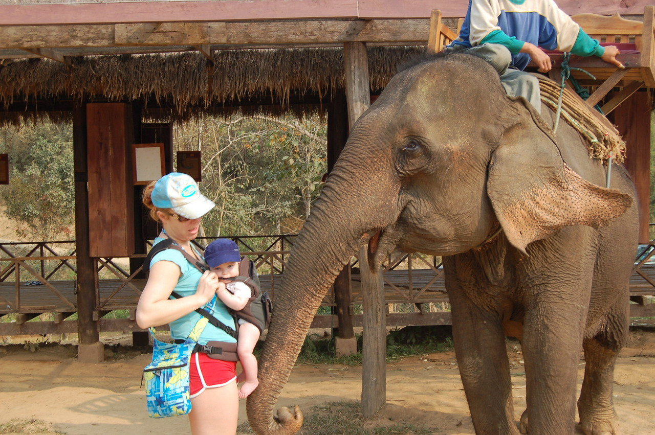 Anakin+elephant