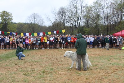 Before the start of the Leatherman's Loop 2010, Atka the Ambassador Wolf from the NY Wolf Conservation Center encouraged runners with a howling sendoff. (photo by Carol Gordon)