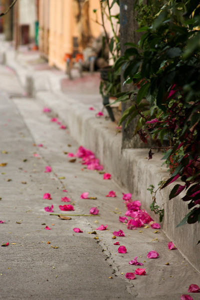 Flower petals litter the gutters, a welcome difference from the man-made sort of litter.