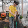 Tribune-Star/Joseph C. Garza<br /> A Spring Break spent with care: Creighton University student Jessie Riehl, 18, of Milwaukee, Wis., waters seedlings inside the White Violet Center for Eco-Justice green house Thursday as part of her alternative Spring Break at St. Mary-of-the-Woods.