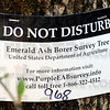Survey underway: The large purple insect traps hanging in ash trees are marked by these signs. Biologists are trying to track the migration of the Emerald Ash Borer across the state.