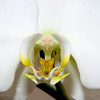 3-23-10 Orchid
