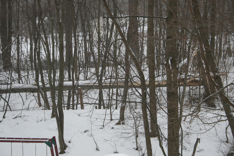 This is from our last wind/snow storm in Feb. A big tree fell down in our backyard- no damage to anything else, thank God!