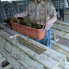 Perfect fit: Michael Gaskin places a planter into the top of a bench made to go near the horticulture building at the Wabash Valley Fairgrounds. Gaskins was working on his Eagle Scout project.