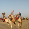 So - after the pyramids, and lunch, a caravan of jeeps took us out into the desert to catch a camel ride.