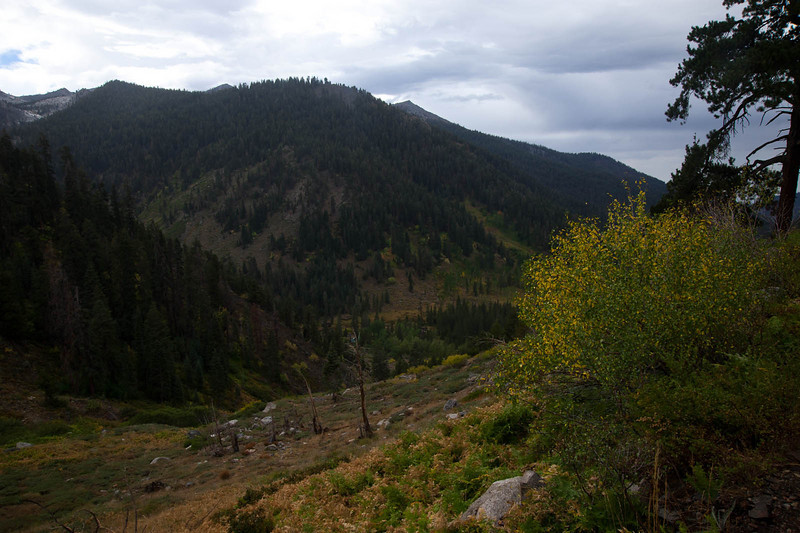 Above Mineral King